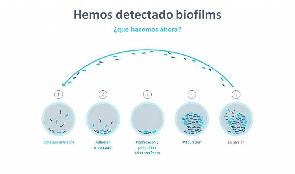 Los biofilms en la industria alimentaria